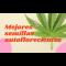 Mejores semillas autoflorecientes