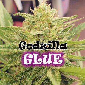 Godzilla Glue Feminizada Dr. Underground