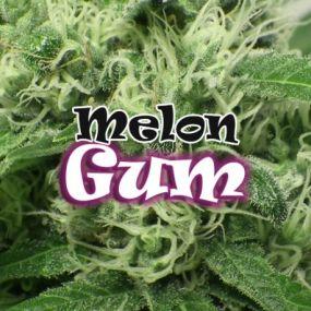 Melon Gum Feminizada Dr. Underground