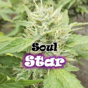 Soul Star Feminizada Dr. Underground