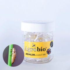 ADALIAcontrol 250 larvas Agrobio Adalia Bipunctata