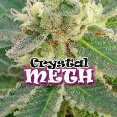 Crystal Meth Feminizada Dr. Underground
