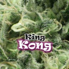 King Kong Feminizada Dr. Underground